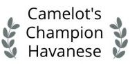Camelot's Champion Havanese