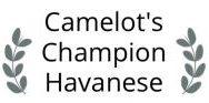Camelot's Champion Havanese